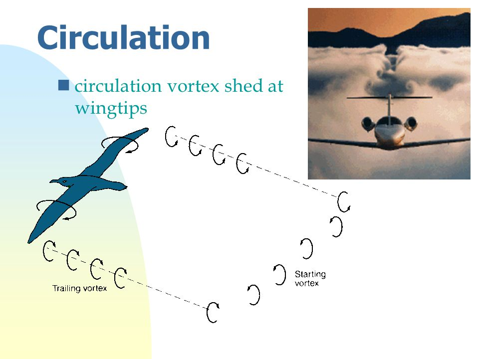 Circulation ncirculation vortex shed at wingtips