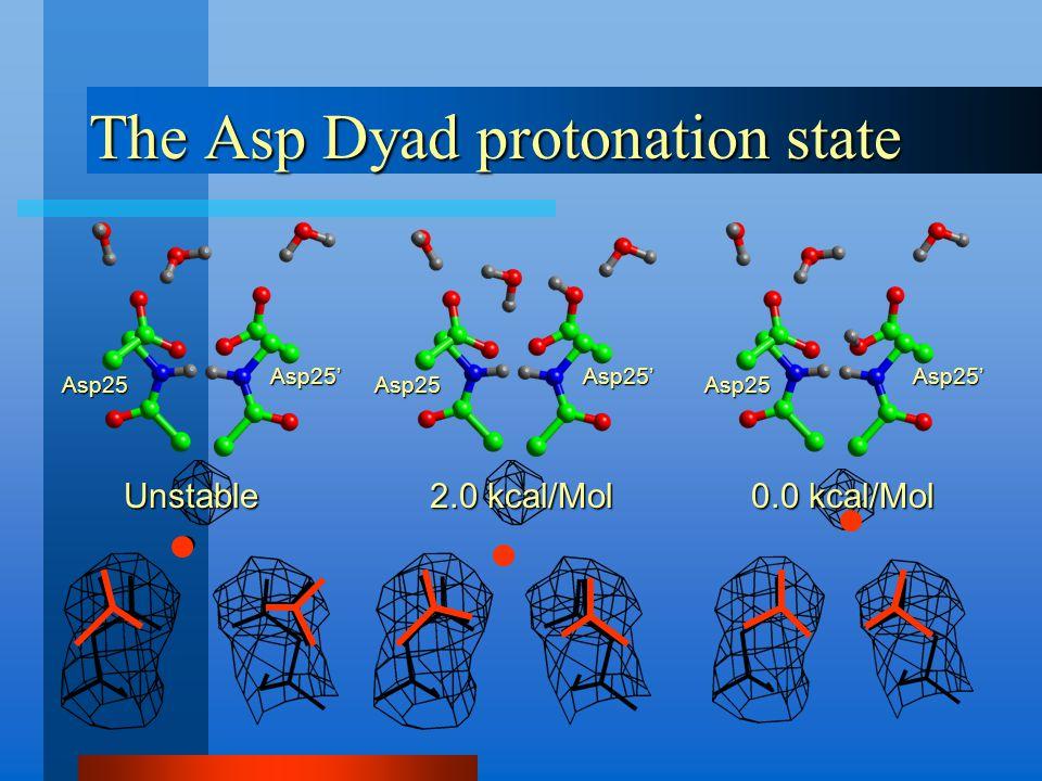 The Asp Dyad protonation state Asp25 Asp25' Asp25 Asp25' Asp25 Asp25' Unstable 0.0 kcal/Mol 2.0 kcal/Mol