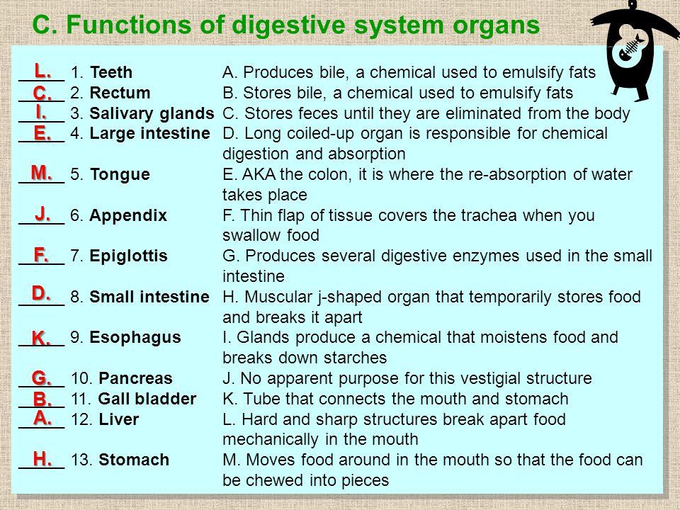 C. Functions of digestive system organs _____ 1. TeethA.