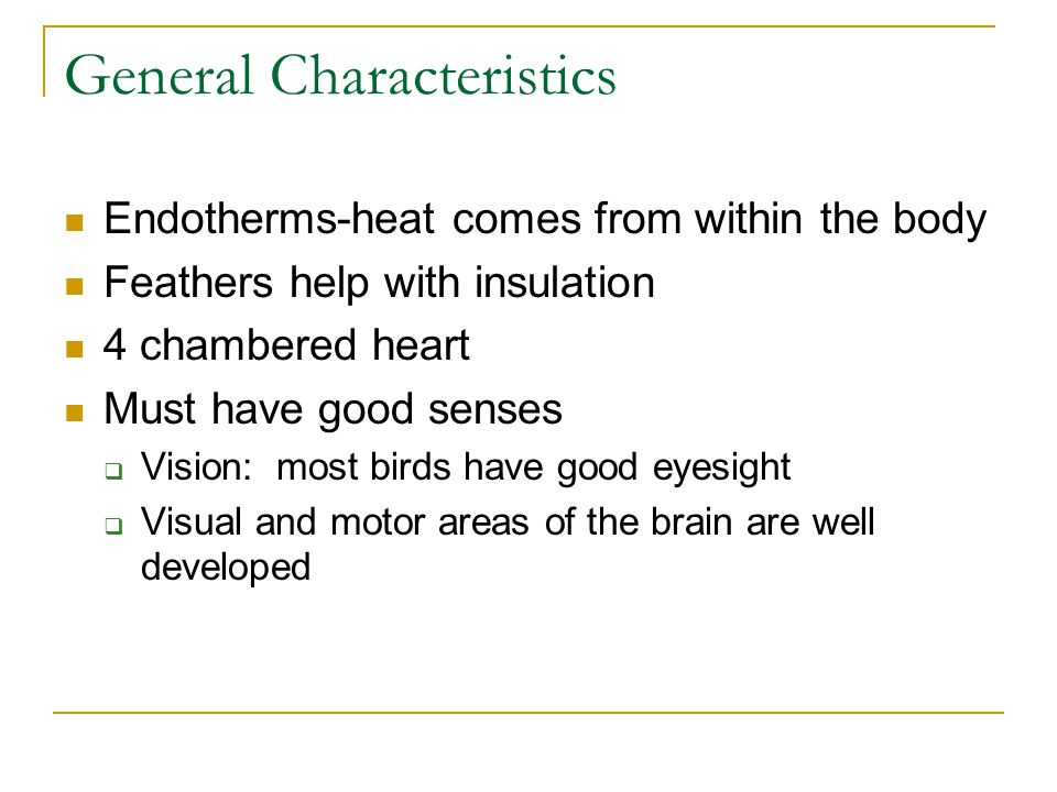 General Characteristics Endotherms-heat comes from within the body Feathers help with insulation 4 chambered heart Must have good senses  Vision: mos
