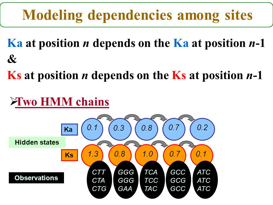 Modeling dependencies among sites Ka at position n depends on the Ka at position n-1 & Ks at position n depends on the Ks at position n-1 Hidden states Observations 0.71.00.81.3 GGG GGG GAA CTT CTA CTG 0.7 0.80.3 0.10.2 0.1 TCA TCC TAC GCC GCG GCC ATC ATC ATC Ka Ks  Two HMM chains