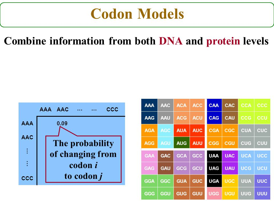 AAAAACCCC AAA0.09 AAC CCC … The probability of changing from codon i to codon j … Codon Models Combine information from both DNA and protein levels AA