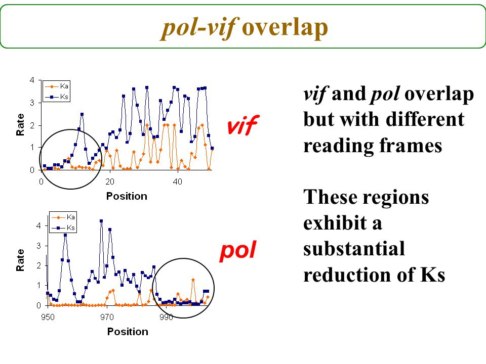 pol-vif overlap pol vif vif and pol overlap but with different reading frames These regions exhibit a substantial reduction of Ks