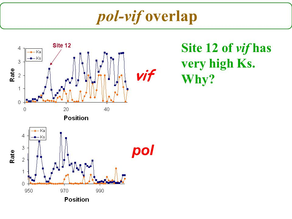 pol-vif overlap pol vif Site 12 of vif has very high Ks. Why Site 12