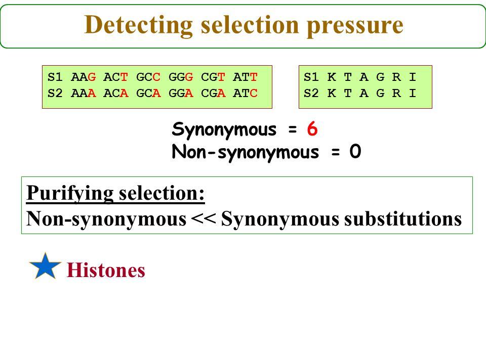 S1 AAG ACT GCC GGG CGT ATT S2 AAA ACA GCA GGA CGA ATC Purifying selection: Non-synonymous << Synonymous substitutions S1 K T A G R I S2 K T A G R I Histones Detecting selection pressure Synonymous = 6 Non-synonymous = 0