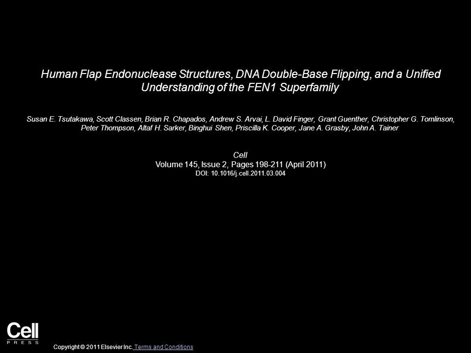 Human Flap Endonuclease Structures, DNA Double-Base Flipping, and a Unified Understanding of the FEN1 Superfamily Susan E.