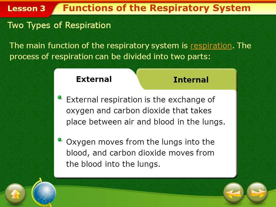 Lesson 3 Functions of the Respiratory System The main function of the respiratory system is respiration.