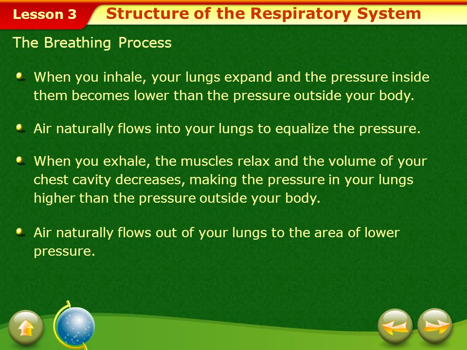 Lesson 3 The Breathing Process When you inhale, your lungs expand and the pressure inside them becomes lower than the pressure outside your body.
