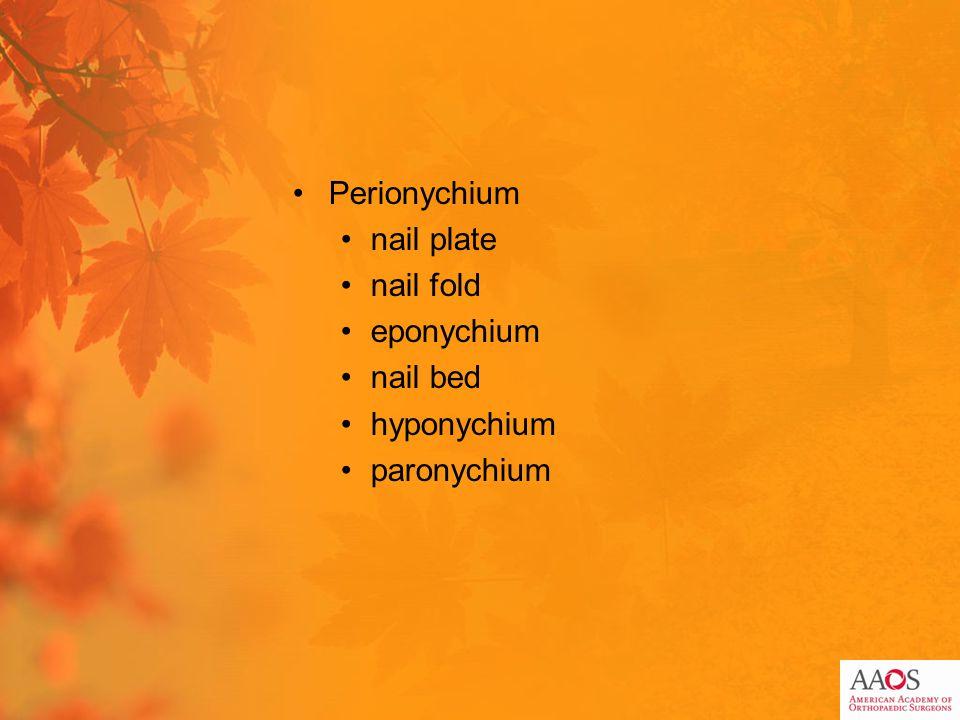 Perionychium nail plate nail fold eponychium nail bed hyponychium paronychium