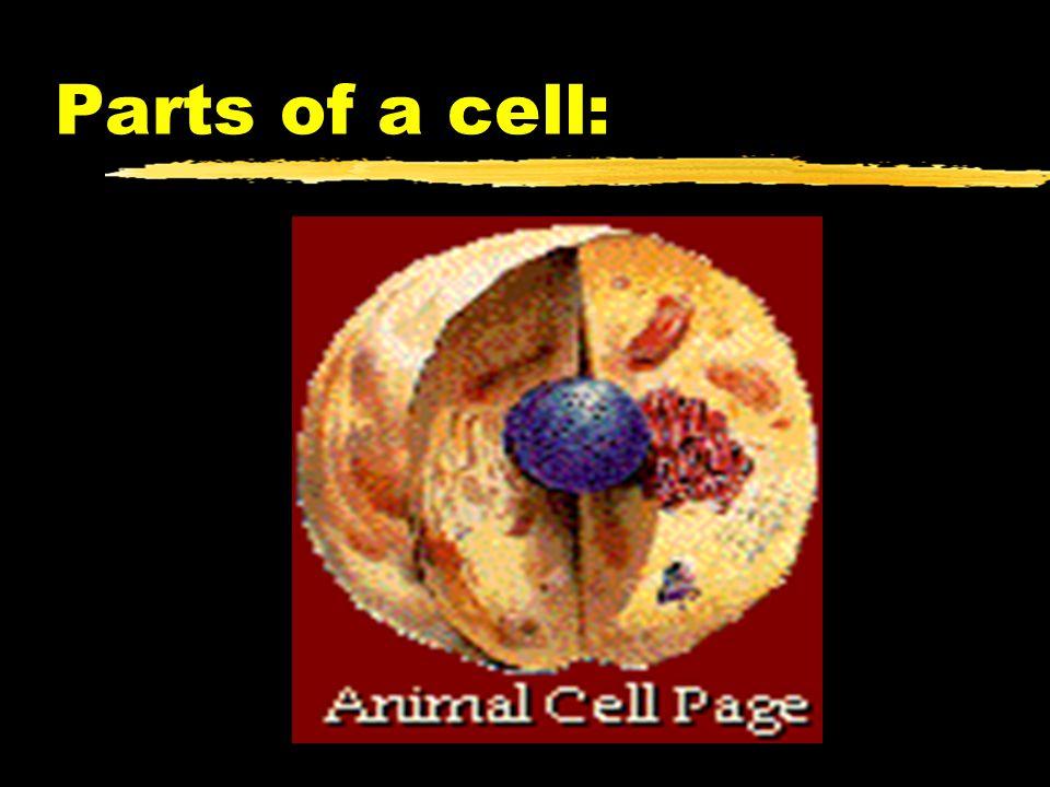 Golgi Apparatus zMembrane sacks that store newly produced proteins.