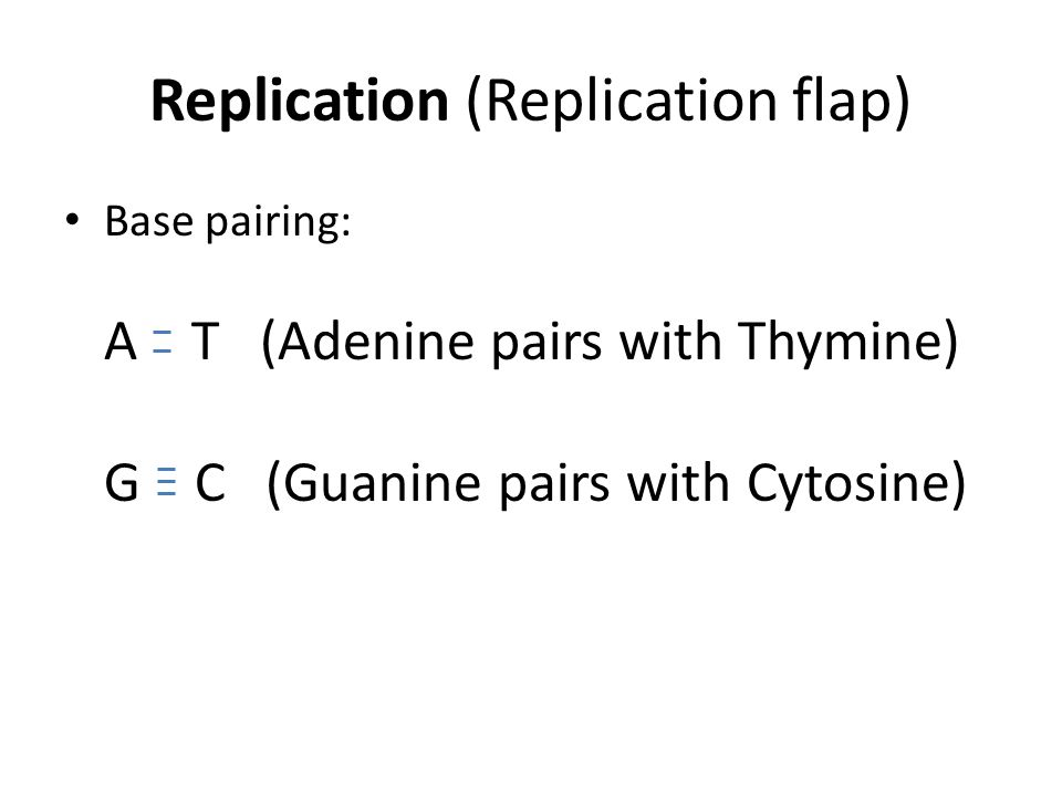 Replication (Replication flap) Base pairing: A T (Adenine pairs with Thymine) G C (Guanine pairs with Cytosine)