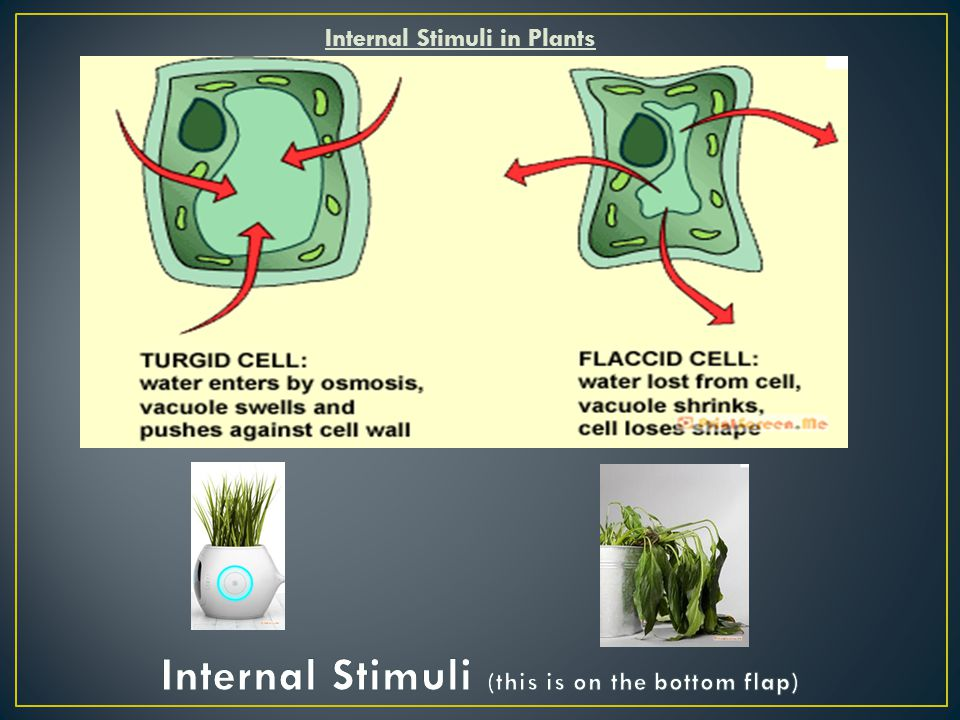 Internal Stimuli in Plants