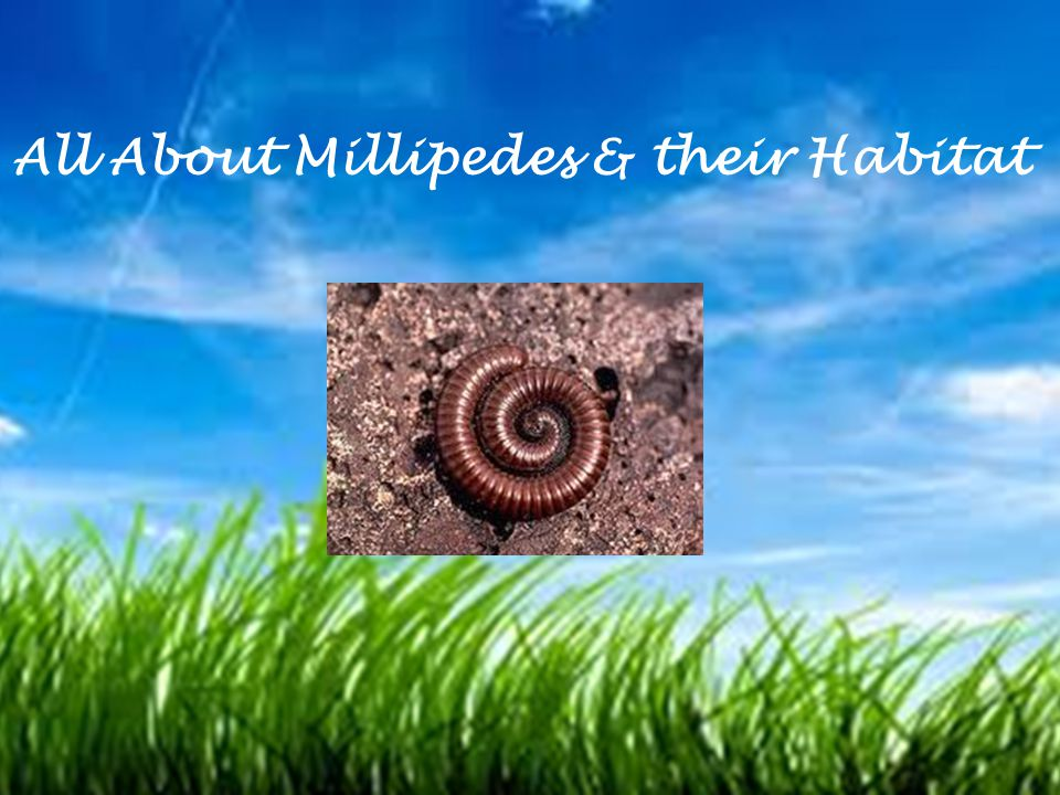 All About Millipedes & their Habitat
