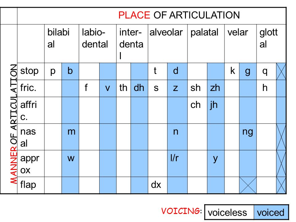–Approximant: [w],[y] 2 articulators come close but don't restrict much Between vowels and consonants Lateral: [l] –Tap or flap: [ ] e.g. butter