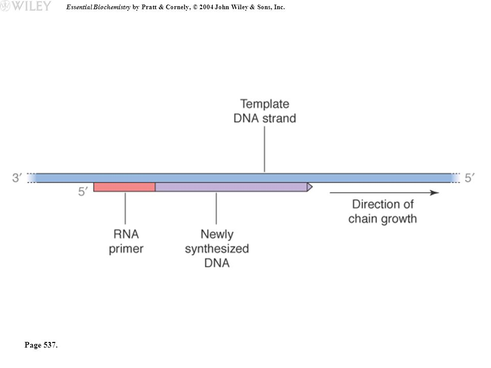 Essential Biochemistry by Pratt & Cornely, © 2004 John Wiley & Sons, Inc. Page 537.