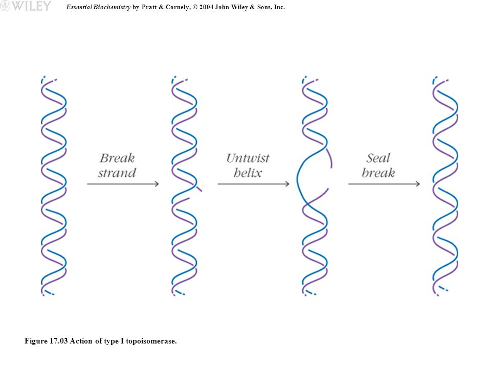 Essential Biochemistry by Pratt & Cornely, © 2004 John Wiley & Sons, Inc.
