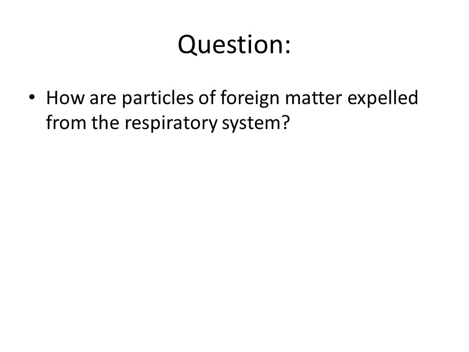 Respiratory System Main function is to supply oxygen to the body and remove carbon dioxide and water.