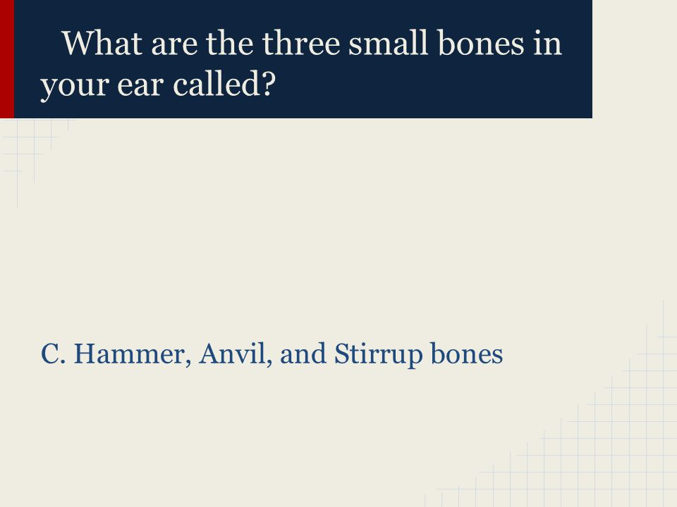 What are the three small bones in your ear called? C. Hammer, Anvil, and Stirrup bones