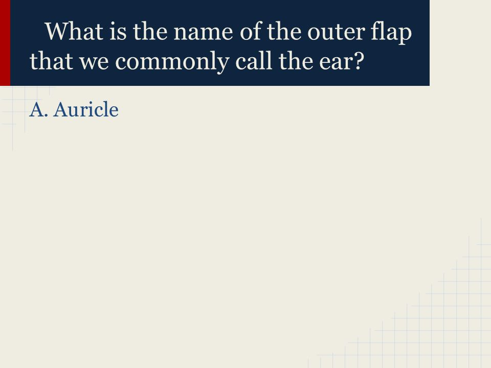 What is the name of the outer flap that we commonly call the ear? A. Auricle