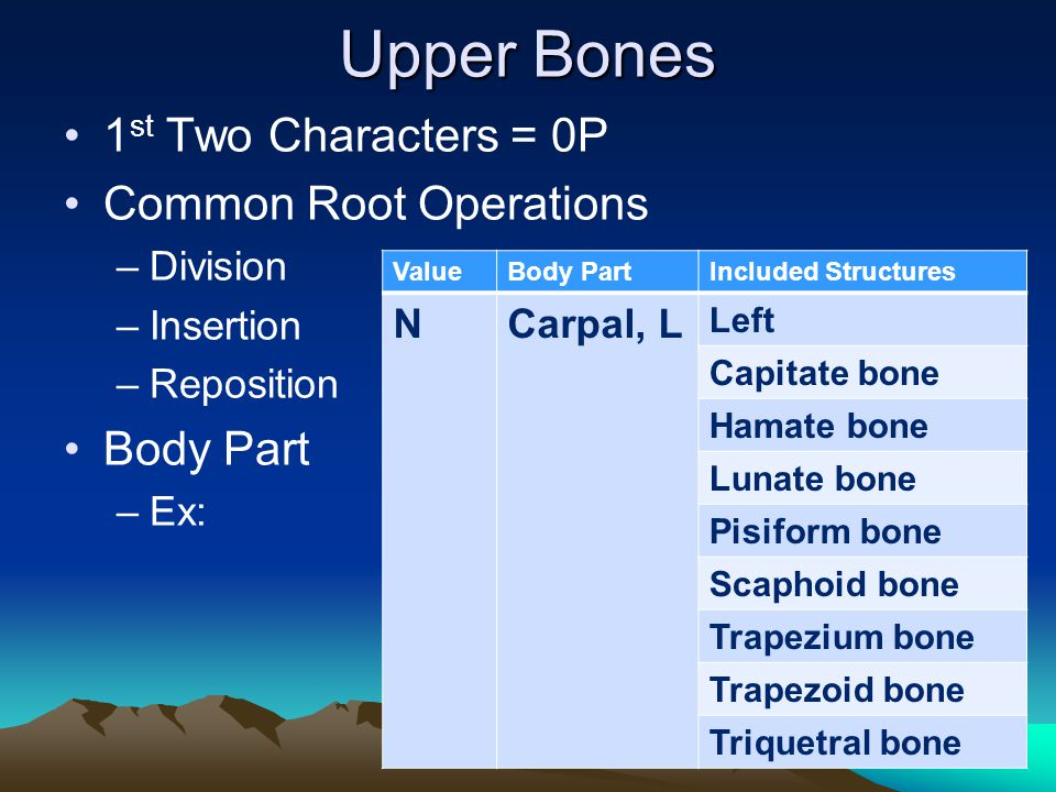 Upper Bones 1 st Two Characters = 0P Common Root Operations –Division –Insertion –Reposition Body Part –Ex: ValueBody PartIncluded Structures NCarpal,