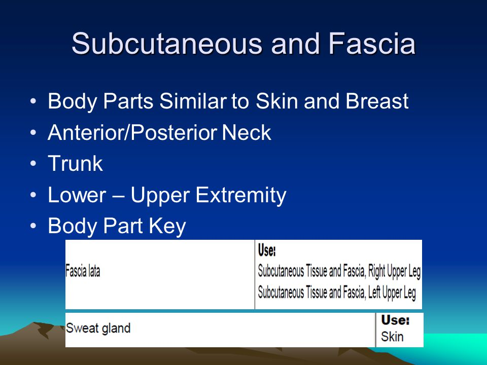 Subcutaneous and Fascia Body Parts Similar to Skin and Breast Anterior/Posterior Neck Trunk Lower – Upper Extremity Body Part Key