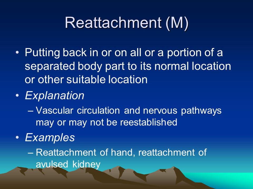 Reattachment (M) Putting back in or on all or a portion of a separated body part to its normal location or other suitable location Explanation –Vascul