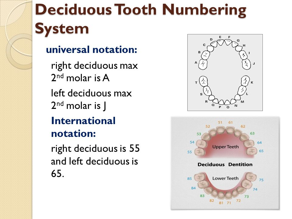 Deciduous Tooth Numbering System universal notation: right deciduous max 2 nd molar is A left deciduous max 2 nd molar is J International notation: ri