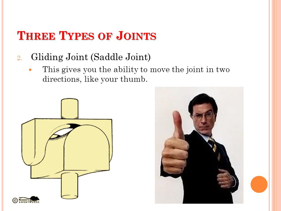 T HREE T YPES OF J OINTS 2. Gliding Joint (Saddle Joint) This gives you the ability to move the joint in two directions, like your thumb.