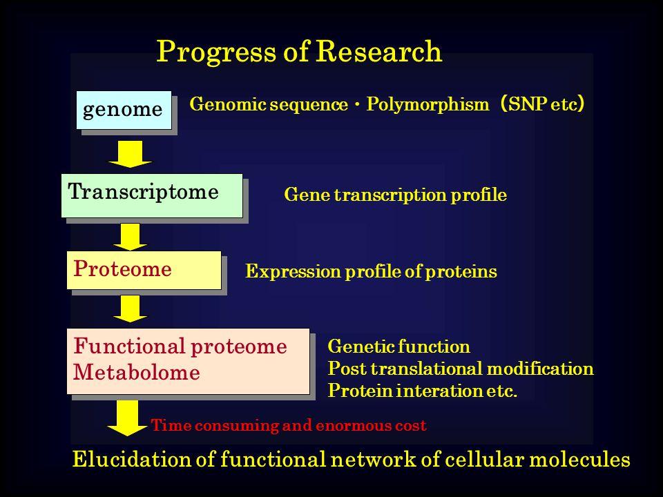 Progress of Research genome Genomic sequence ・ Polymorphism ( SNP etc ) Transcriptome Gene transcription profile Proteome Expression profile of proteins Functional proteome Metabolome Functional proteome Metabolome Genetic function Post translational modification Protein interation etc.