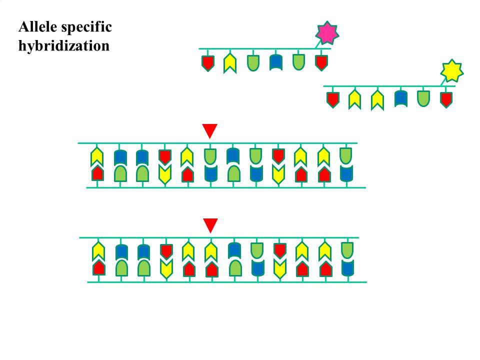 Allele specific hybridization