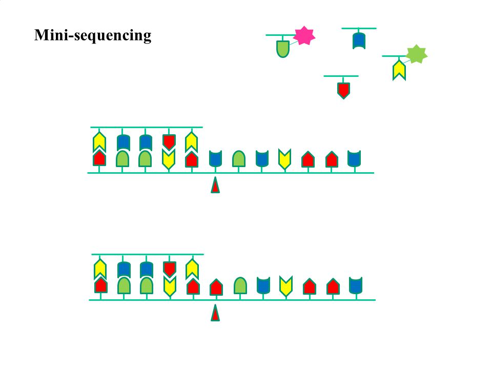 Mini-sequencing