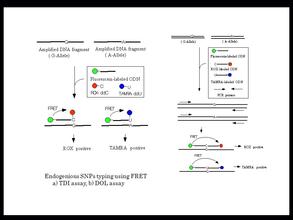 Endogenious SNPs typing using FRET a) TDI assay, b) DOL assay