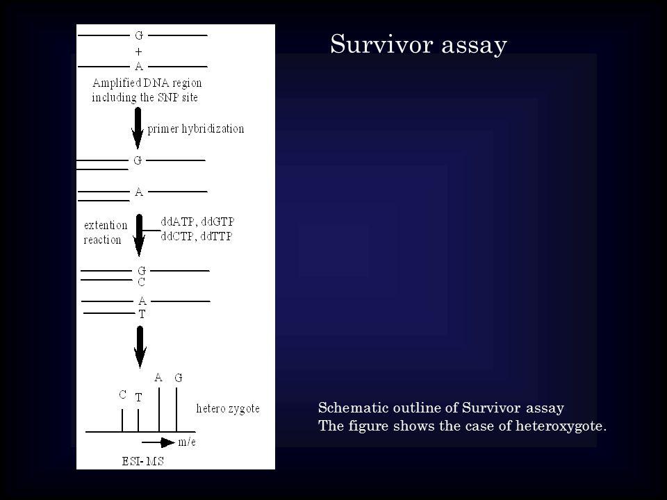 Schematic outline of Survivor assay The figure shows the case of heteroxygote. Survivor assay