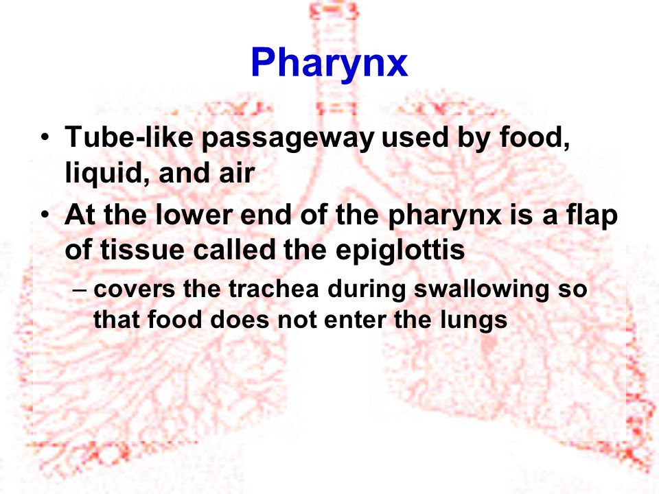 Pharynx Tube-like passageway used by food, liquid, and air At the lower end of the pharynx is a flap of tissue called the epiglottis –covers the trach