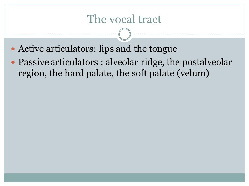 The vocal tract Active articulators: lips and the tongue Passive articulators : alveolar ridge, the postalveolar region, the hard palate, the soft pal