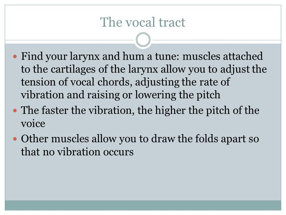 The vocal tract Find your larynx and hum a tune: muscles attached to the cartilages of the larynx allow you to adjust the tension of vocal chords, adj