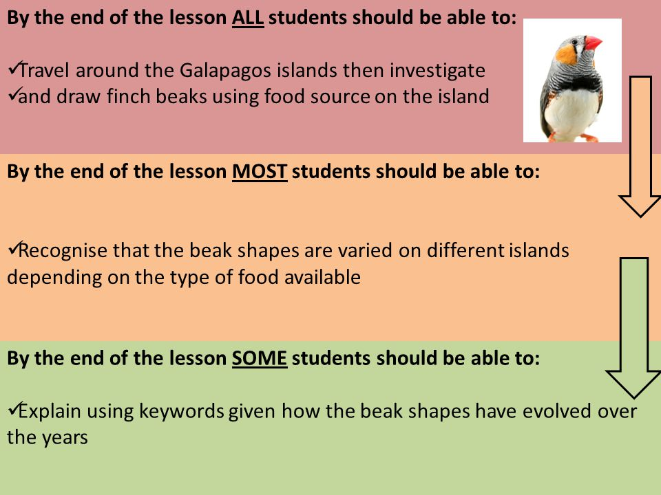By the end of the lesson ALL students should be able to: Travel around the Galapagos islands then investigate and draw finch beaks using food source on the island By the end of the lesson MOST students should be able to: Recognise that the beak shapes are varied on different islands depending on the type of food available By the end of the lesson SOME students should be able to: Explain using keywords given how the beak shapes have evolved over the years Year 10