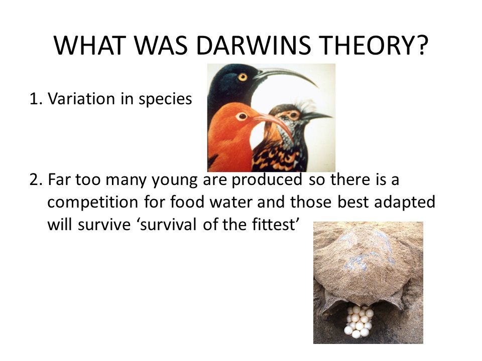 WHAT WAS DARWINS THEORY. 1. Variation in species 2.