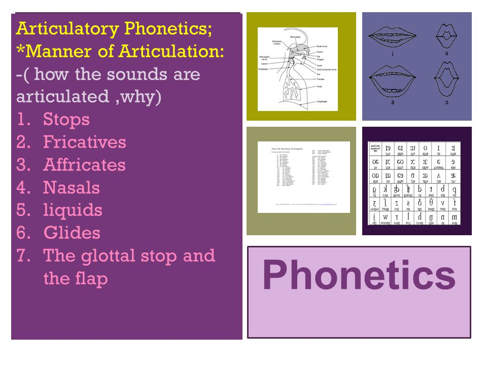 + Phonetics Articulatory Phonetics; *Manner of Articulation: -( how the sounds are articulated,why) 1.Stops 2.Fricatives 3.Affricates 4.Nasals 5.liqui
