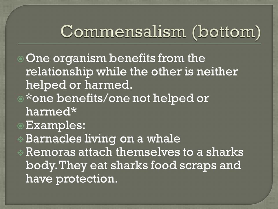  One organism benefits from the relationship while the other is neither helped or harmed.  *one benefits/one not helped or harmed*  Examples:  Bar