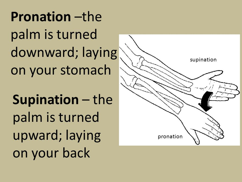Pronation –the palm is turned downward; laying on your stomach Supination – the palm is turned upward; laying on your back supination pronation