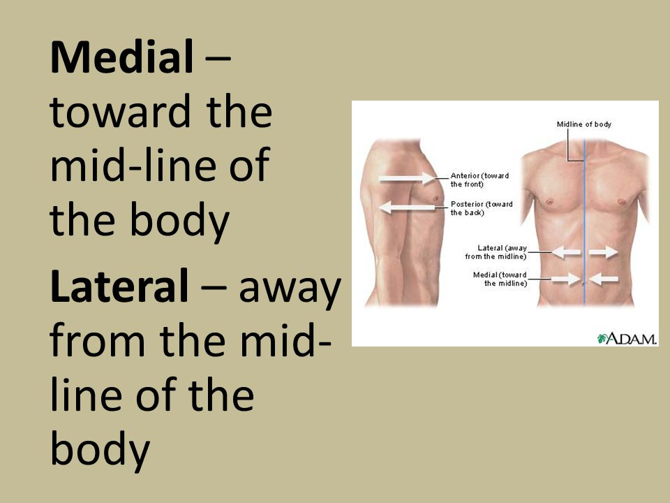 Proximal – toward the point of attachment to the body Distal – Away from the point of attachment to the body