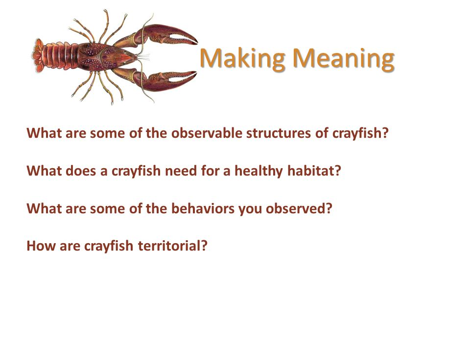 Making Meaning What are some of the observable structures of crayfish? What does a crayfish need for a healthy habitat? What are some of the behaviors