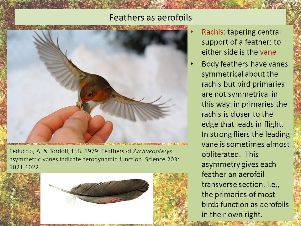 How did birds evolve flight.