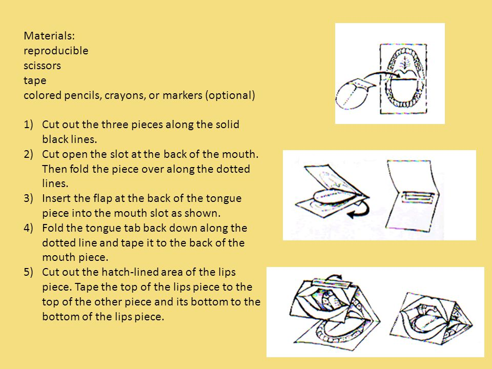Show what you know You will make a 3D model of the tongue and mouth.