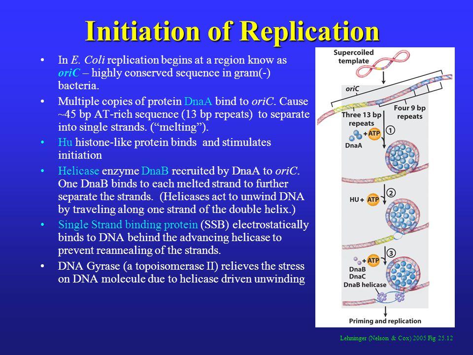 Initiation of Replication In E.