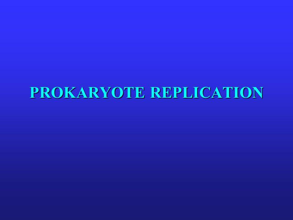 PROKARYOTE REPLICATION