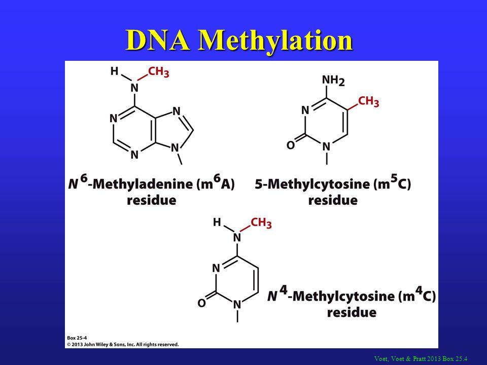 Voet, Voet & Pratt 2013 Box 25.4 DNA Methylation
