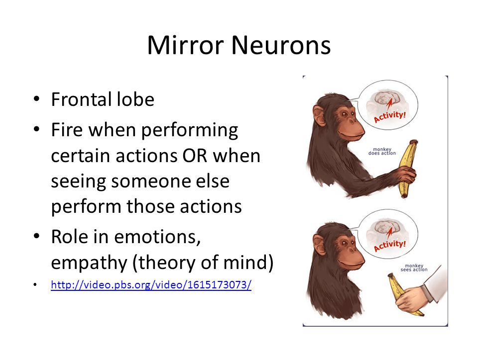 Mirror Neurons Frontal lobe Fire when performing certain actions OR when seeing someone else perform those actions Role in emotions, empathy (theory of mind) http://video.pbs.org/video/1615173073/