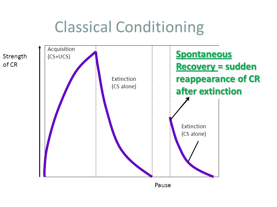 Classical Conditioning Strength of CR Pause Acquisition (CS+UCS) Extinction (CS alone) Extinction (CS alone) Spontaneous recovery of CR Spontaneous Recovery = sudden reappearance of CR after extinction